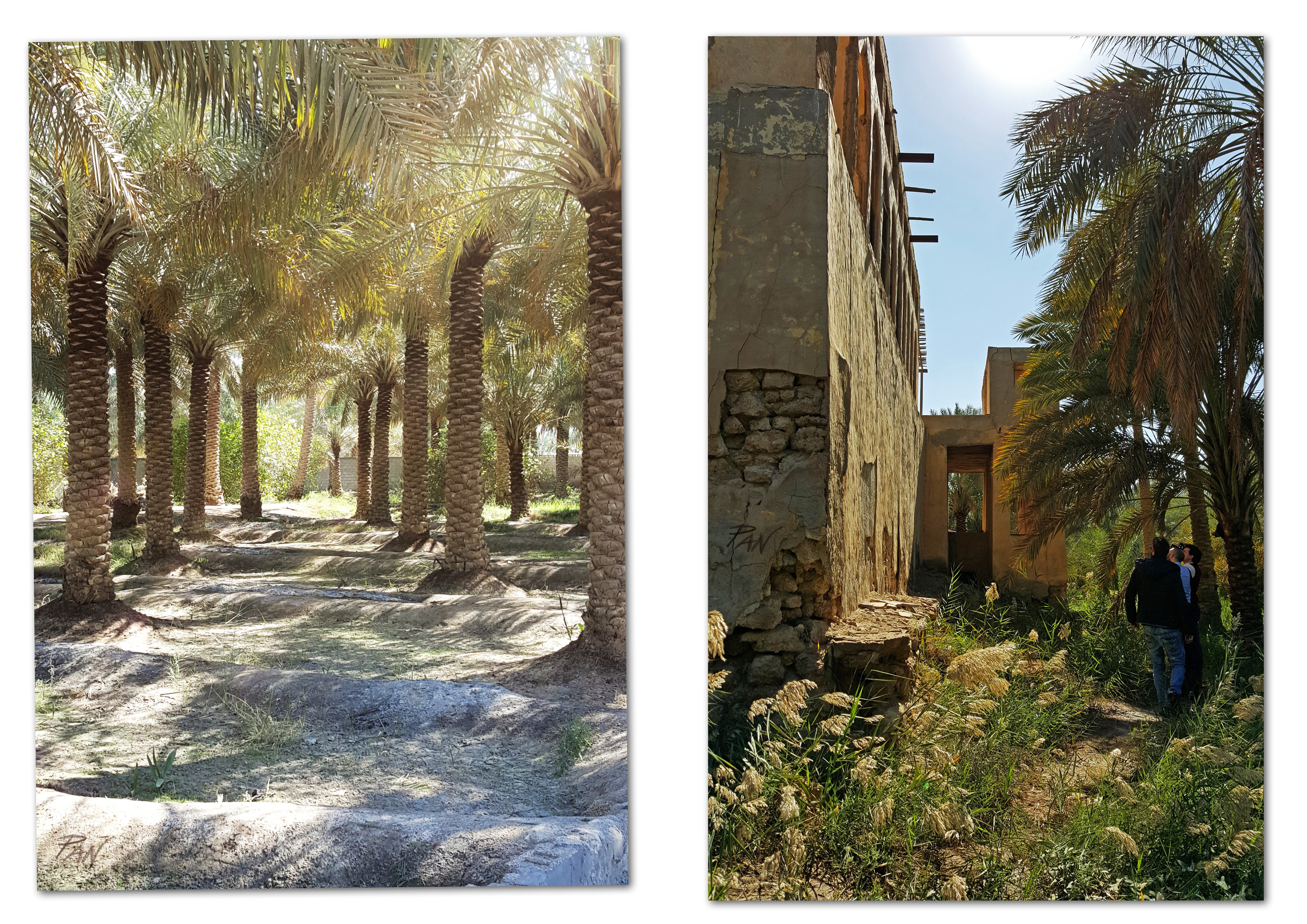 C'era una volta l'Eden, Al-Ahsa, Saudi Arabia, ph. PaN